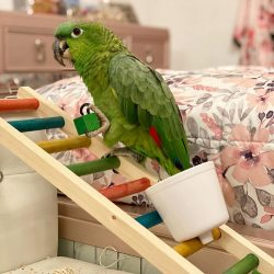 how to take care of parrots